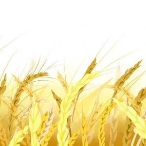 790.2公斤!翼城刷新我省冬小麦单产纪录!
